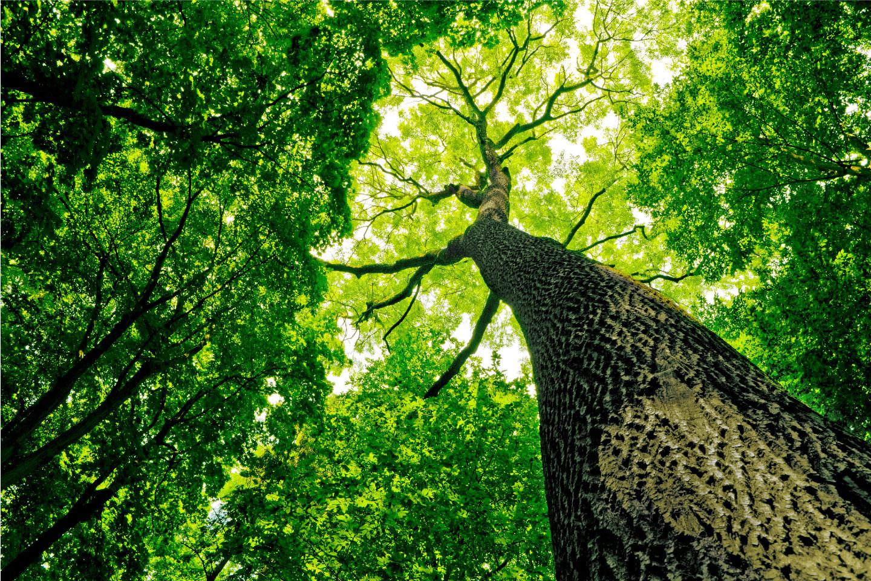 Life Reforest, EASME