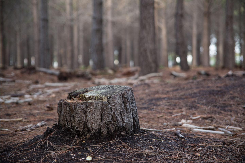 Objetivos programa Life Reforest